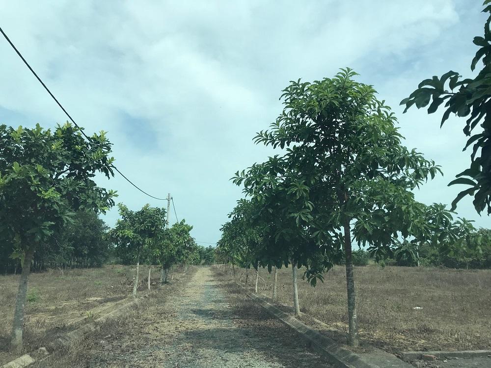 Bán đất Long Thành Đồng Nai